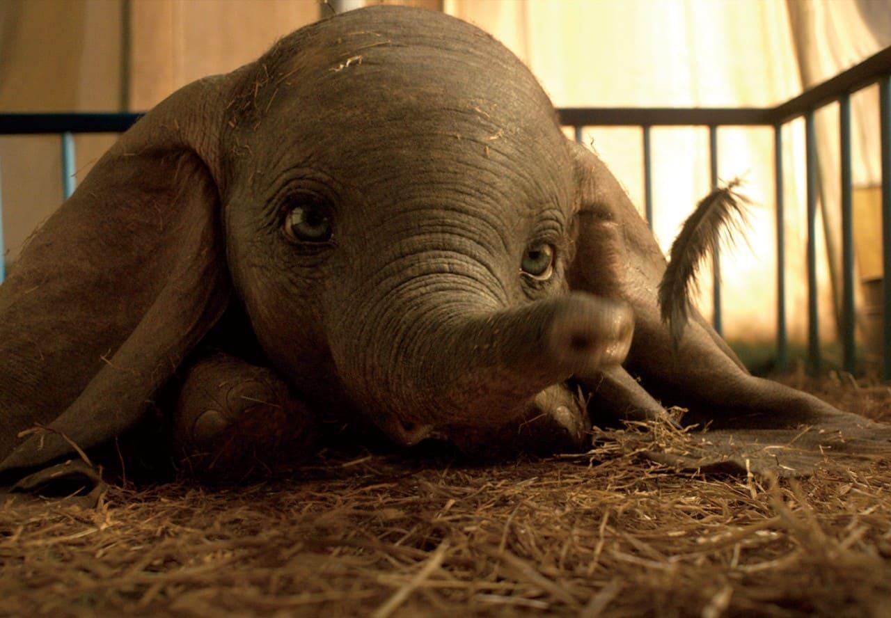 耳が大き過ぎる子象ダンボ